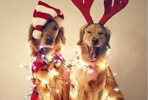 Christmas!⛄❄