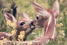 Animals- Nature / Ζώα- Φύση