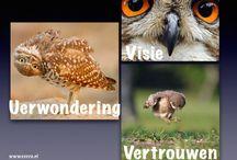 EXOVA: onderwijsvernieuwing: Visie - Verwondering - Vertrouwen / De leerling is eigenaar van zijn/haar eigen leren en kan zich in eigen tempo en op eigen niveau ontwikkelen.   Elk kind is van nature leergierig. Wij sluiten aan bij de belevingswereld van de kinderen en nemen hun verwondering als uitgangspunt voor leren.  Vertrouwen is de sleutel tot ontwikkeling. Het opent de weg naar durven, doen en doorzetten, en hierdoor naar zelfstandigheid en succes.  www.exova.nl