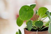 Puutarha/viherhuone/gröna saker