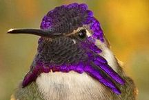 ✿⊱♥  BEIJA-FLORES♥ ✿ /  ♥♥ AVES♥♥ / by Norma Mazzucco
