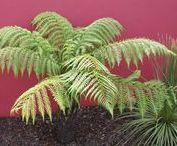 Nos végétaux / Pour chaque création, nous utilisons des végétaux adaptés à votre lieu de vie, votre jardin, (exposition, sol...), en fonction de leur développement futur. Ils correspondent à l'aménagement que nous vous proposons en tenant compte de vos goûts (couleurs, formes, floraisons, senteurs...).
