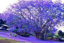 Meravigliosa natura / Alberi,fiori,paesaggi,orizzonti,fenomeni naturali,creature stupende.....