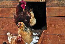Animali / Da compagnia e da allevamento