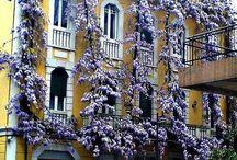 Finestre e balconi / Antiche,moderne,liberty,altro