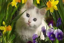 Gatti / Gattoni,gattacci,gatte,gatti,gattini,micini .....