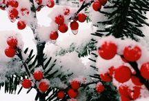 Inverno / Paesaggi invernali