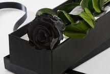 Timeless Roses / Preserved Roses