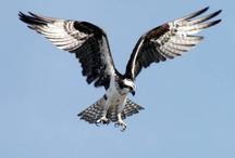 Birds Take Flight / by Jeanna Stallings