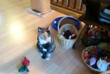 Our Customer's Cats / by Cat Faeries