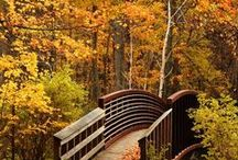 Autumn / Beautiful scenes of Autumn / by Mike DeBruyn