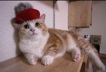 Cosplay Munchkin Kiku / Munchkin cats Kikunosuke Cosplay(cap) photo