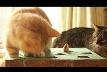 Cats playing with Toys / Cats playing with Toys