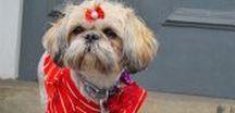 Doggy Fashion / Stylish and cute dog clothes, fashion & accessories.  www.indigoandmouse.com