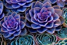 Color- Purple