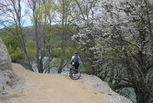 Clutha Gold Trail, Otago, New Zealand / Clutha Gold Trail is a 72 km Cycling and Walking Trail between Lake Roxburgh Village and Lawrence.  The Trail now has sections open for walking and cycling. For information on the Trail contact the Roxburgh Visitor Information Centre.