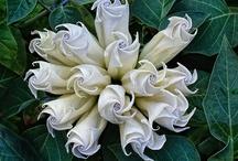 Inspiring Floral Photos
