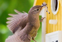 Charming Bird Houses