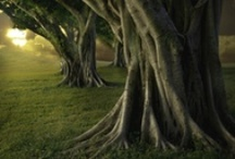 ******* NATURE - TREES *******
