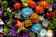 ***** NATURE - FLOWERS *****