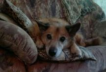 I miss you... / In memory of my dog Tessu 1.6.1998- 24.11.2013. Forever in my heart! <3
