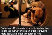 Dog facts/ healt