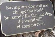 Rescue dogs / .