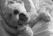 Sleeping & dreaming