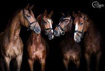 Horses / by Leah Sheehan