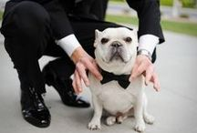 Wedding Photo Booth / Include your whole family at your wedding! Dog as best men and bridesmaids.