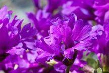 Primavera / La primavera è sbocciata in Valtellina! Prati verdi, fioriture meravigliose, farfalle varipinte e cieli tersi. I profumi e i colori della natura sono ovunque in #Valtellina...