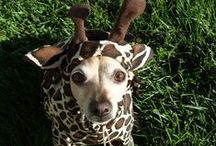 Halloween dogs and cats / Pet costumes! / by Lawrence Veterinary Hospital