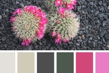 Colour Scheme Source Book / A source of great colour combinations for interior decor schemes for paintwork and accessories.