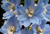 Flowers for inspiration /  Fairy dresses or Ballet tutus
