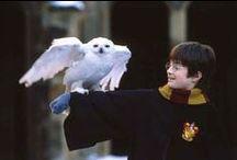 Harry Potter / by Linda Serrano