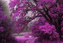 Trees & Flowers, Gardens & Bowers / Beauty, Light & Color / by Linda Serrano