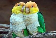 !~beautiful-birds~! / by Neusa Fujimoto