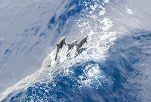 Oceano / La vida en el océano, olas espectaculares, iceberg, algas, mamíferos marinos, peces, caballitos de mar, medusas, corales. / by Quena Peleteiro