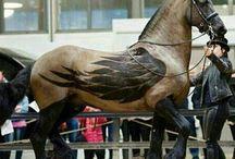 Horse Flash Pferdeschur Muster Schermuster Horse clipping / Pferde Themen