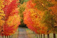 Jesień - Autumn