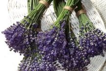 House Of ~ LAVENDER