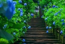 Garden Love / by Darlene Clement