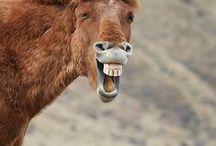 (: Smiling creatures :)
