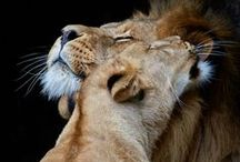 Infinite love for animals..