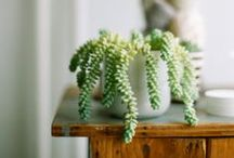 P... is for Plants and pots / Plants I want + care guide for the plants I have