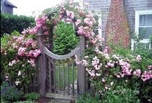 Fence with Trellises