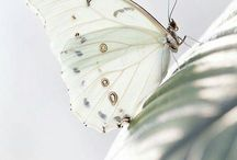 """Beauty of Butterflies / In ancient Greek the word for butterfly is """"Psyche"""", which translated means """"soul"""". This was also the name for Eros' human lover and when the two figures are depicted they are often surrounded by butterflies."""