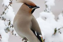 Beauty of All Feathered Friends / A bird doesn't sing because it has an answer, it sings because it has a song