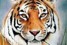 tiger comics