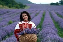 Lavender Essential Oil / The must have essential oil, we take a look at the applications, health benefits and use of Lavender oil throughout history.   www.ovviooil.com